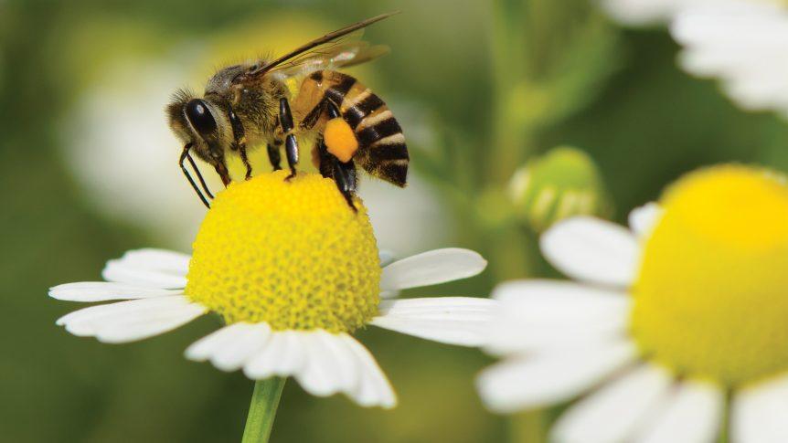 photo of honey bee on flower
